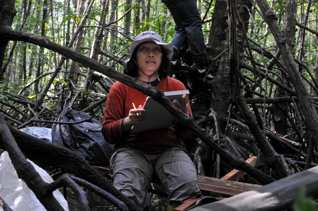 Mangrove biomass assesment (3)